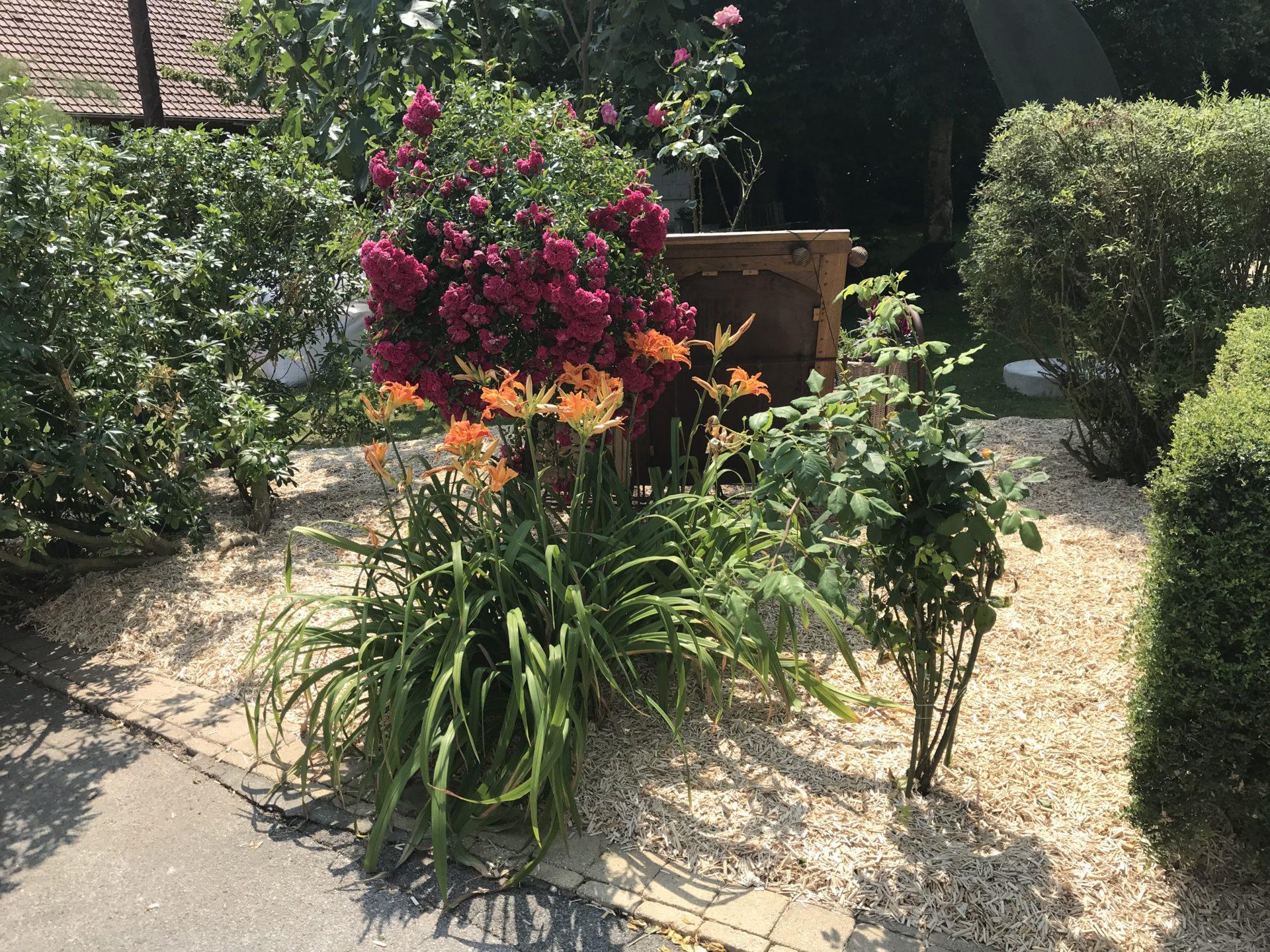Jardin chambre d'hôte baie de somme